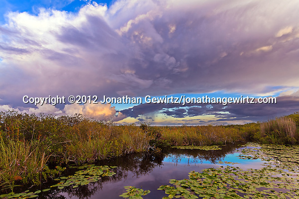Morning rain showers pass over a lily-covered pond on the Anhinga Trail in Taylor Slough, Everglades National Park, Florida. (© 2012 Jonathan Gewirtz / jonathan@gewirtz.net)