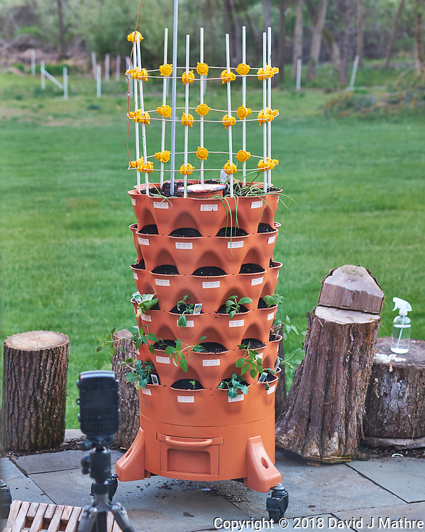 Garden Tower with Purchased Seedlings. Image taken with a Fuji X-H1 camera and 60 mm f/2.4 macro lens (DAVID J MATHRE)