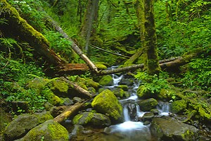 Stream in Columbia River Gorge National Scenic Area, Oregon, US. (Roddy Scheer)