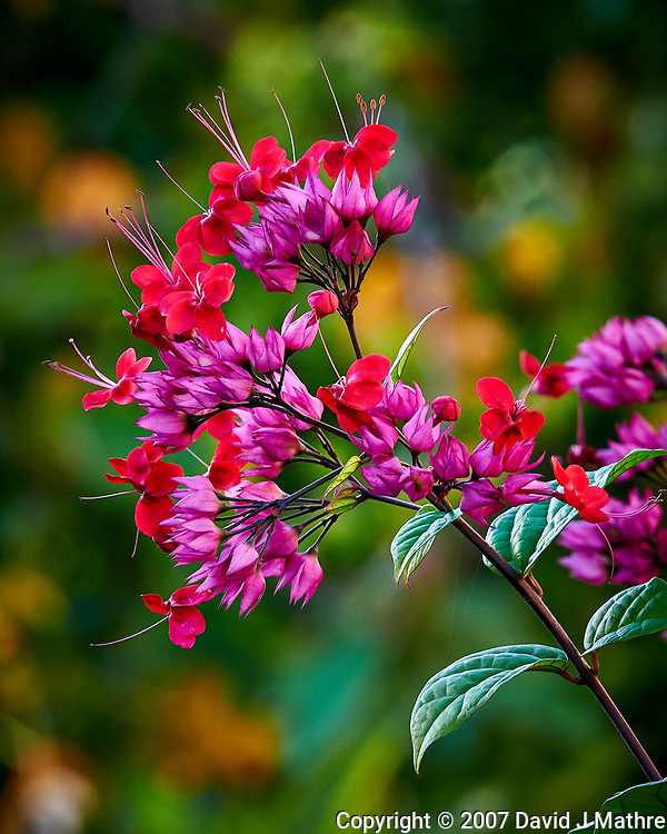 Bright red flowers in St. Petersburg, Florida. Image taken with a Nikon D300 camera and 200 mm f/2 VR lens (ISO 900, 200 mm, f/11, 1/125 sec). (David J Mathre)