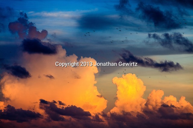 A flock of birds flies across the sky while majestic towering cumulus clouds glow in warm sunlight in the background. (Jonathan Gewirtz   jonathan@gewirtz.net)