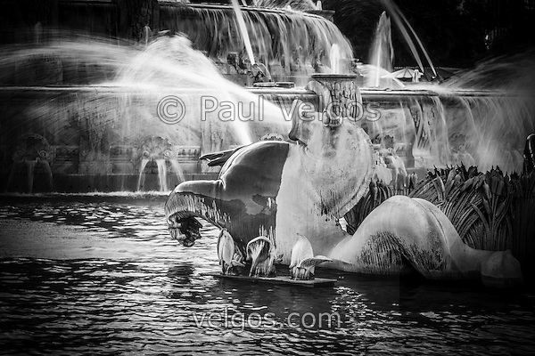Chicago Buckingham Fountain seahorse in black and white. (Photographer: Paul Velgos)