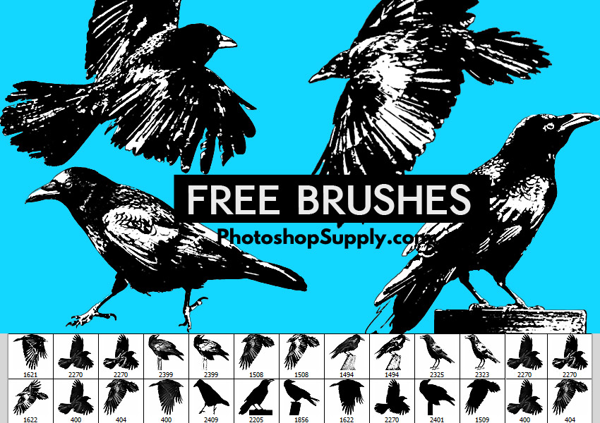 Bird Brushes Photoshop