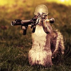 Army Squirrel Photo Manipulation - Photoshop Tutorials