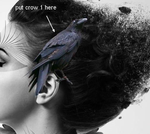 crow17
