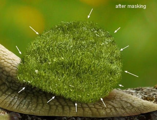 snail10b