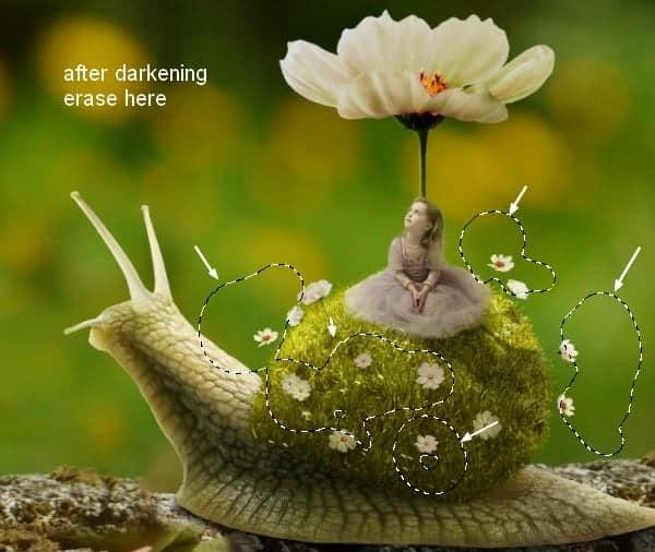 snail26a