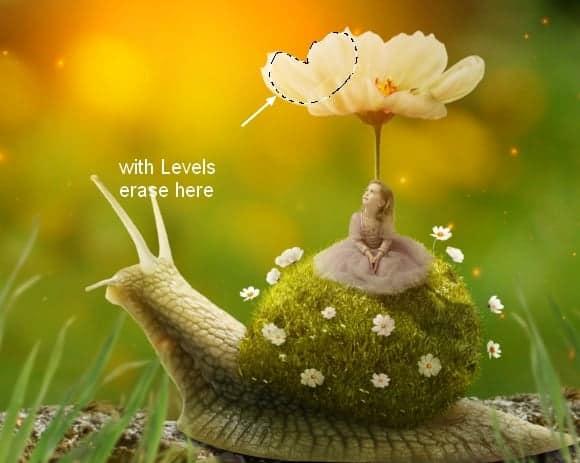 snail32a