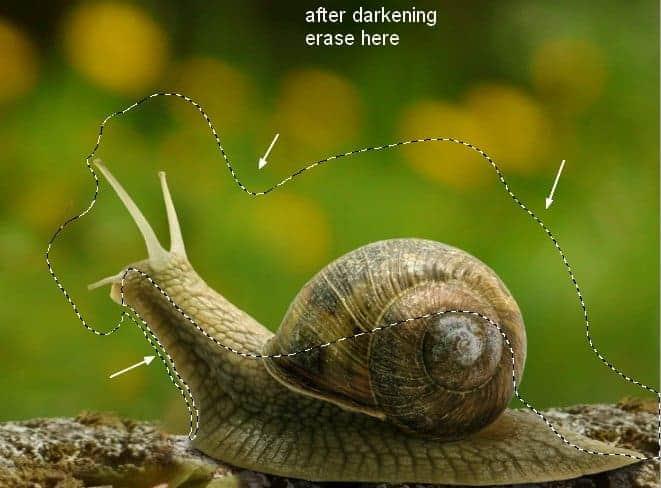 snail8a