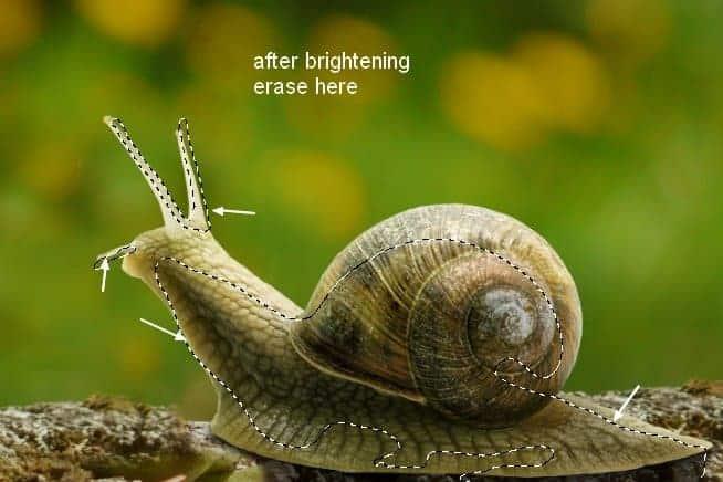 snail8c