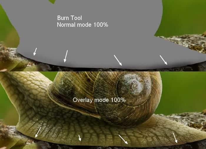 snail9a