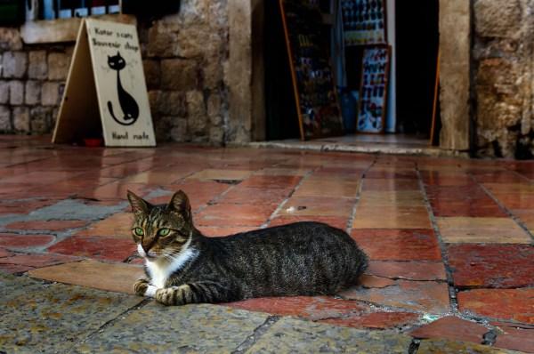 Kotor cats The mayor