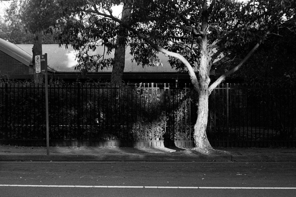 Tree in sunlight | AGFA Karat 36 | Kodak Tri-X 400