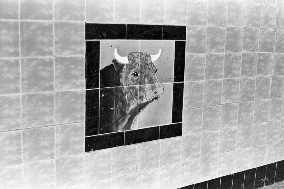 Bull mural | AGFA Karat 36 | Kodak Tri-X 400