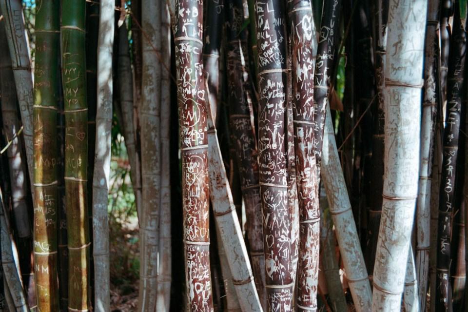 Bamboo messages | Topcon RE Super | Topcor 3.5cm f/2.8 RE Auto | Kodak Pro Image 100