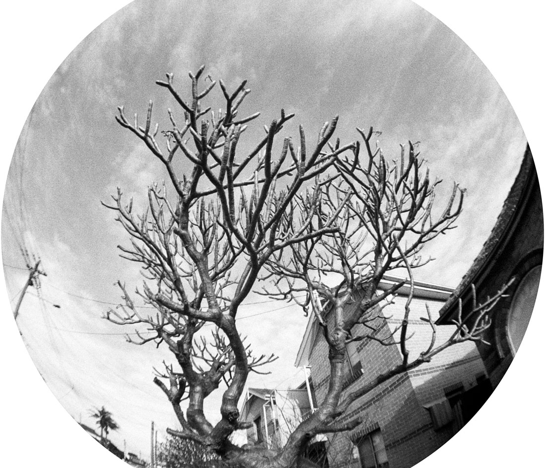 Winter tree | Lomography Fisheye 2 | Ilford HP5 Plus