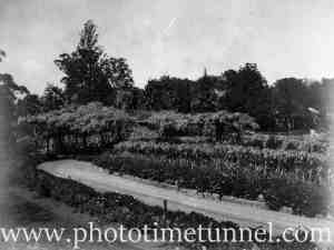 View of Hollywood Pleasure Grounds, Lansvale, Sydney, circa 1928. (8)