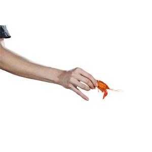 【用手拿熟蝦】不用辛苦去背了