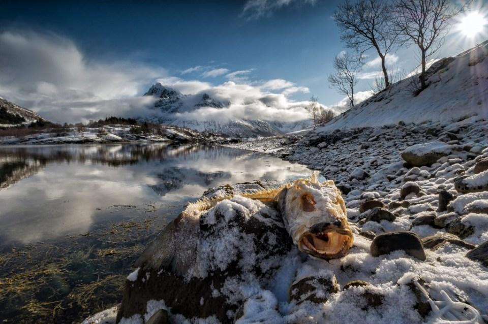 T H E R E M A I N S | Lofoten | © Serdar Ugurlu
