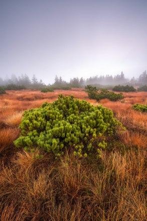 Hornisgrinde © Raik Krotofil