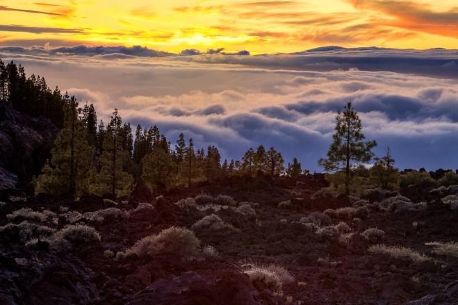 Corona Forestal Fotoreise Teneriffa