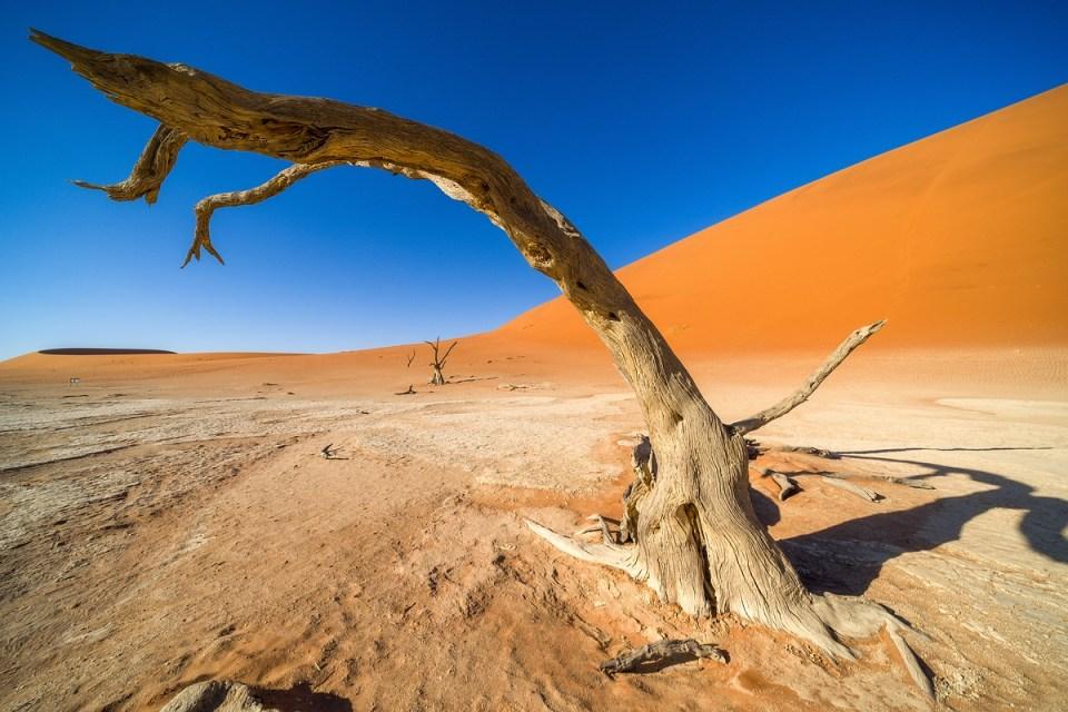 Deadvlei Namibia Bäume