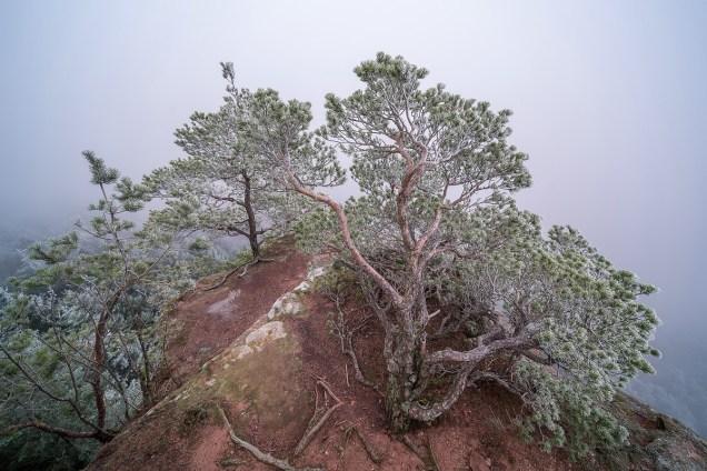Triologie Bäume im Winter