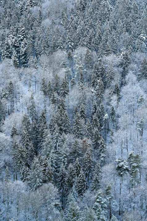 Wintermuster