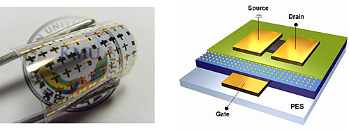 (Left) A photograph of the 3 x 3 cm2 flexible organic memory devices. (Right) A diagram of the memory device architecture. Image credit: Soo-Jin Kim and Jang-Sik Lee.