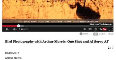 Bird Photography with Arthur Morris