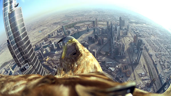 Darshan's flight: Image by Darshan the Eagle and Sony