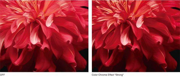 "FUJIFILM X-T30: ""Color Chrome"" effect (left): Images Courtesy of Fujifilm"