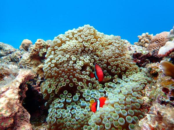 Olympus TOUGH TG-6: Underwater White Balance Shallow: Image Courtesy of Olympus