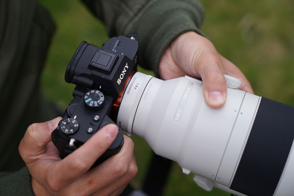 Sony FE 200-600mm F5.6-6.3 G OSS with Sony's E-mount 1.4x teleconverters and Sony Alpha Mirrorless camera: Zoom and aperture range with the 1.4x teleconverter is 280–840mm, F8–9: Image Courtesy of Sony