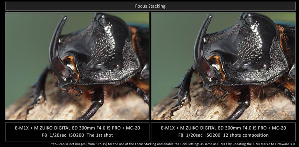 M.Zuiko Digital ED 300mm F4.0 IS PRO and the MC-20: Utilizing Focus Stacking results in photos that are in focus across the entire image, even on super telephoto lenses, which tend to have a shallow depth of field: Images Courtesy of Olympus