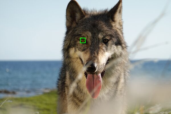 Sony RX100 VII: Real-time Eye AF is available for animals as well as people: Image Courtesy of Sony