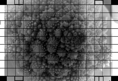 LSST Camera Team/SLAC/VRO Image caption A head of Romanesco recorded across the 3,200 megapixels of Vera Rubin's camera detector