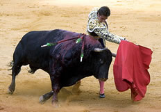 Red rag to a bull