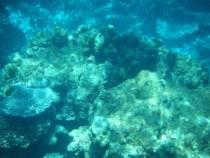 パユ島。たくさんのサンゴ。