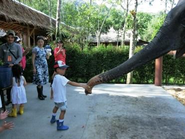 プーケット エレファント サンクチュアリの紹介 ( Phuket Elephant Sanctuary )