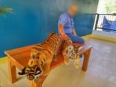 タイガー パーク プーケット ( TIGER PARK PHUKET )