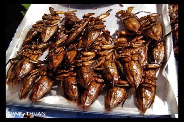 Mang Da Na – Giant Water Bug