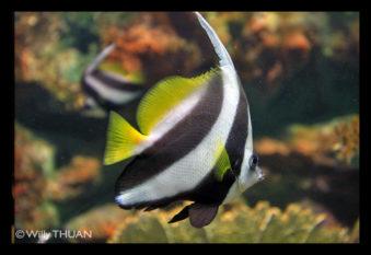 phuket-aquarium1