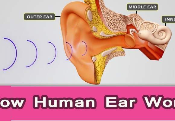 Fascinating Physiology of the Human Ear