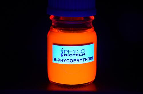 Phycoérythrine-R