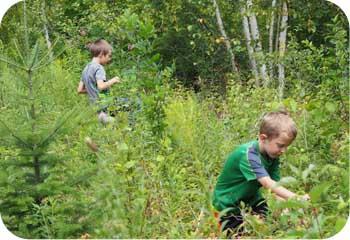 picking wild raspberries