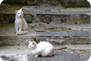 White Cats on Stairs