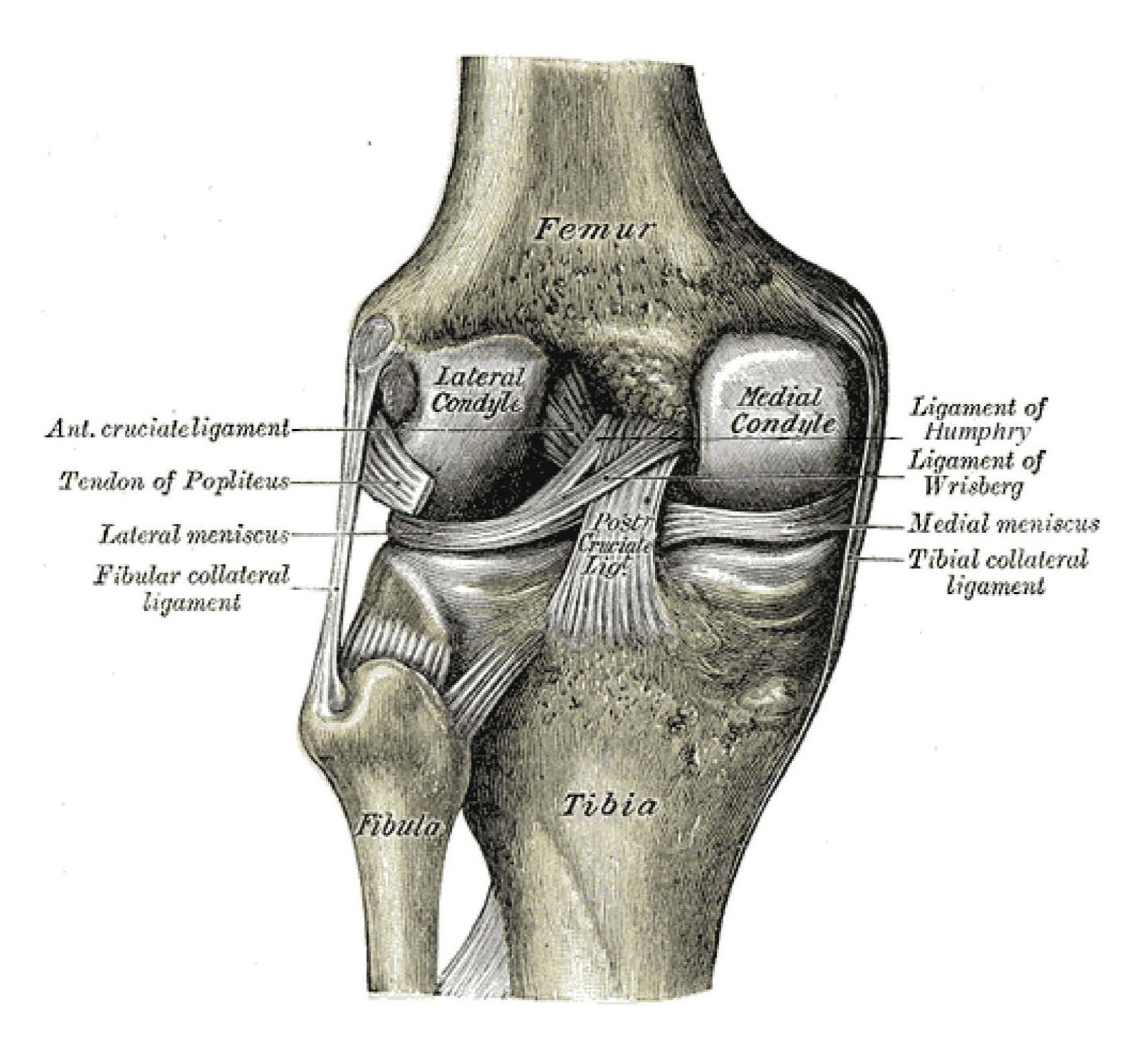 Posterior Cruciate Ligament Injury
