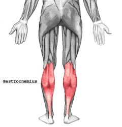 Calf muscle strain injuries in sport: a systematic review of risk factors for injury.