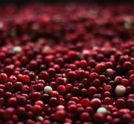 American cranberry.
